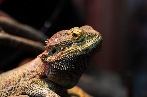 17/365 - Lizard